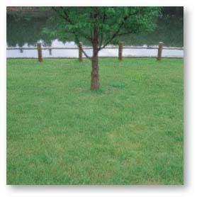 『中島村の緑化木』の画像